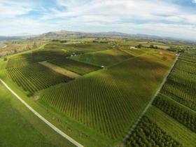 Aieral view of Askerne Winery