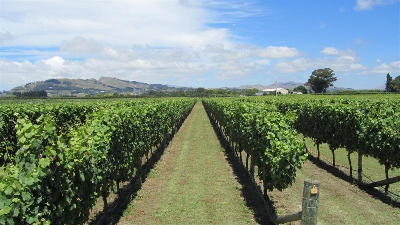 Askerne Winery vines