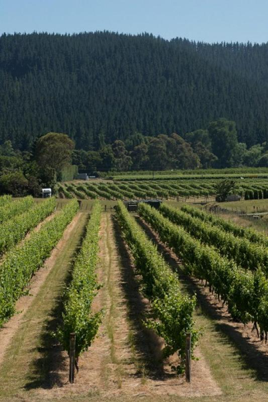 Stunning views of the vines